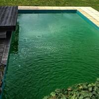 Ihr Pool ist grün geworden und Sie hätten viel lieber kristall-klares Wasser? Wir werden versuchen Ihnen zu helfen!  Zunächst müssen wir feststellen, was die Ursache ist. Meist gibt es zwei unterschiedliche Ursachen